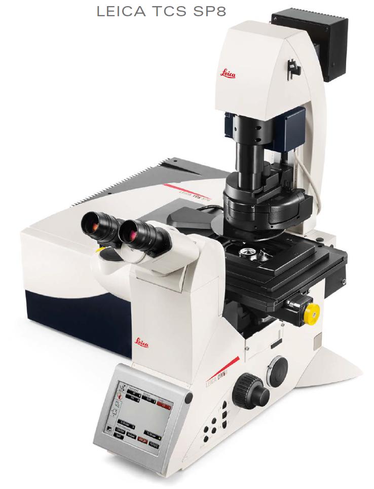 Leica Sp8 Confocal Microscope Ross Fluorescence Imaging Center